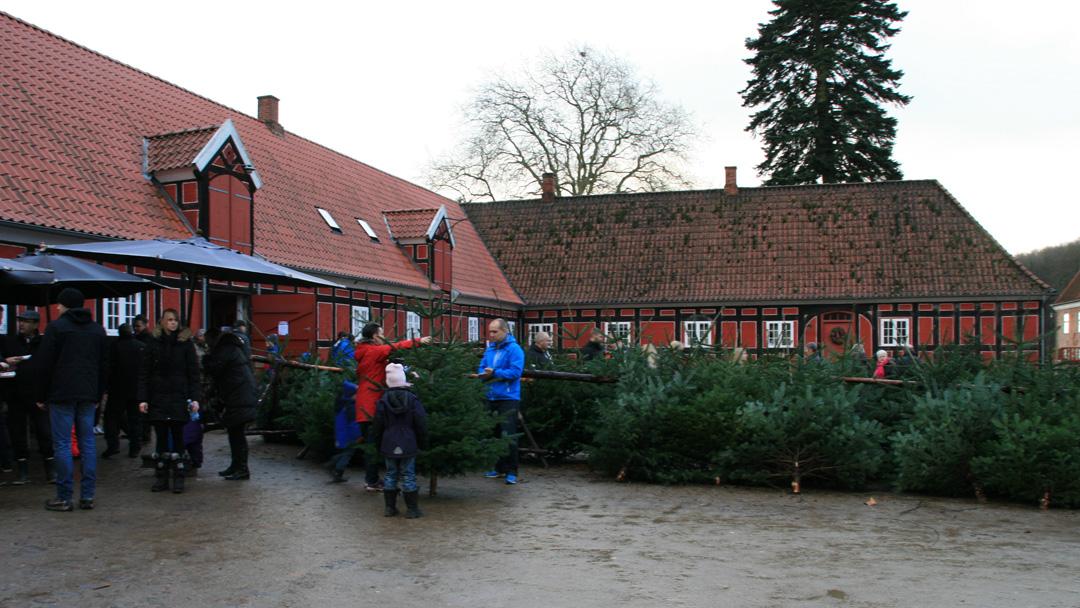 juletræ hentes