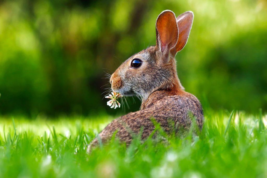 rabbit-1903016_1920