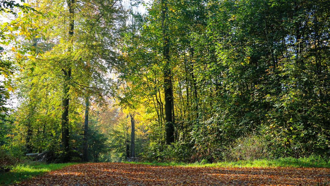 Panoramabillede fra skoven